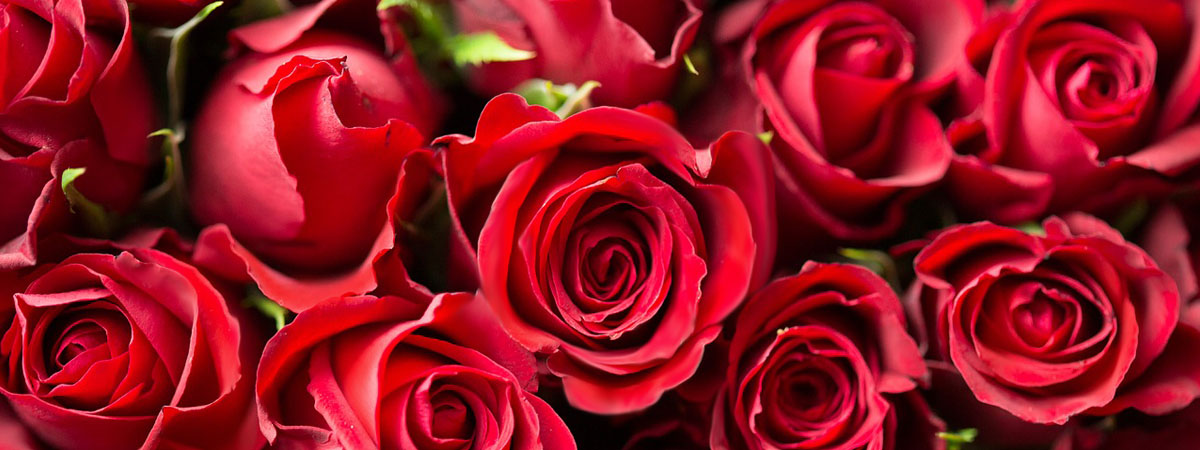 RED ROSES FOR YOU ...
